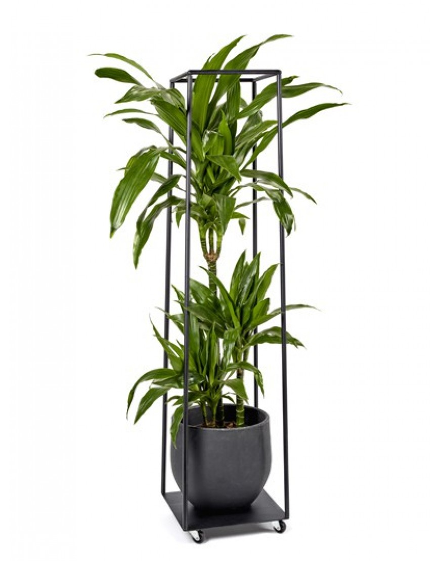 Populair Serax Metalen Plantenrek zwart H.126.5 - Antonio Sciortino IV16